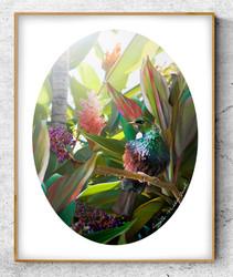 NZ Tui bird in tropical garden setting - oval photo art print / wall art for sale