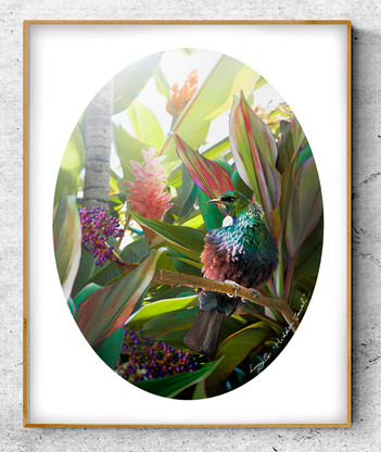 NZ Tui bird in tropical garden setting - oval photo art print / wall art for sale