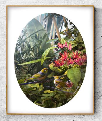 NZ Waxeye / Silvereye birds in lush garden setting - oval photo art print / wall art for sale