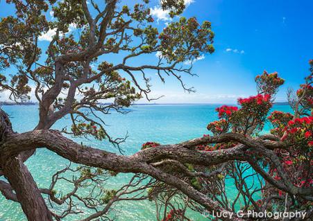 NZ Pohutukawa and beach landscape photo print - photo art print / wall art for sale