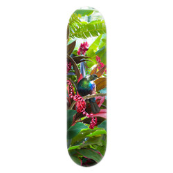 Tropical NZ Tui' printed art skatedeck / wall art by Lucy G