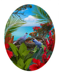 ''KOKAKO'S CALL' - TROPICAL NZ BIRD & LANDSCAPE OVAL PHOTO WALL ART PRINT