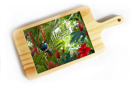 'Contemplation 2' NZ Tui cheeseboard / breadboard