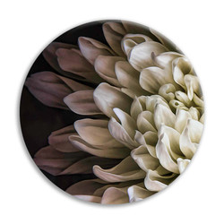 Chrysanthemum 2 circular ceramic wall art tile 20cm diameter