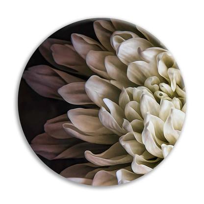 Chrysanthemum 2 circular ceramic wall art tile 20cm diameter