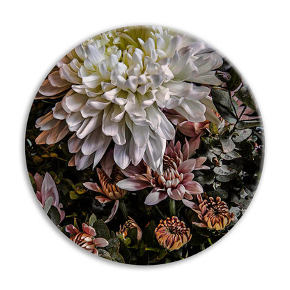 Chrysanthemum 3 circular ceramic wall art tile 20cm diameter