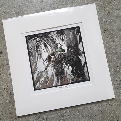 Woodpigeons NZ art print - silver foil print.