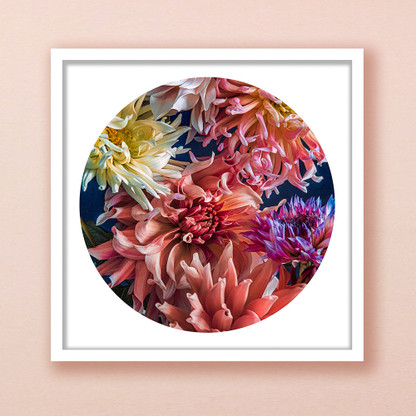 'Beauty in Bloom' (DAHLIA FLOWERS) - PAPER PRINT / CANVAS / FRAMED ART