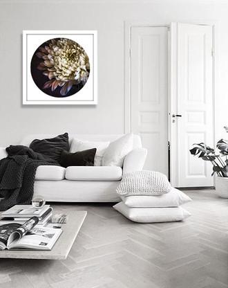 ''Chrysanthemum 3'' - PAPER PRINT / CANVAS / FRAMED ART