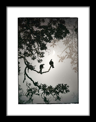 ''Together'' Tui silver foil print