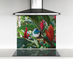 900x750mm DIY glass splashback with Wood Pigeon in tropical garden
