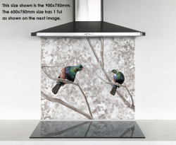 900x750mm DIY glass splashback singing Tui birds in tree