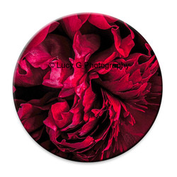Scarlet Red Peony circular wall art tile.