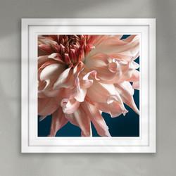 ''Awakening'' stunning flower art print