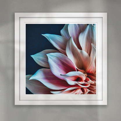 ''Aroha'' beautiful flower petal closeup art print