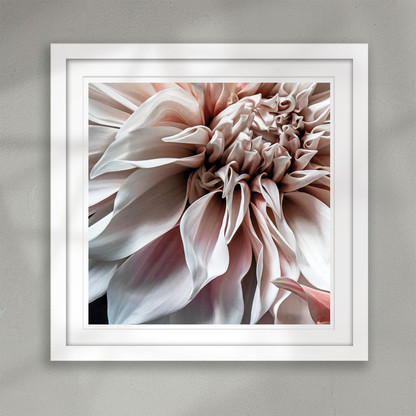 ''Transience'' closeup pale flower art print