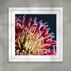 ''Was it a dream ?'' beautiful flower closeup art print