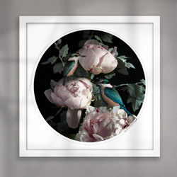 NZ Kingfisher bird and Peony flower circular art print white frame