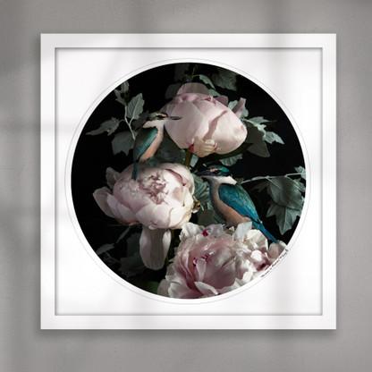 NZ Kingfisher bird and Peony flower circular art print white frame