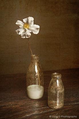 A vintage NZ milk bottle with flower, photo art print for sale.