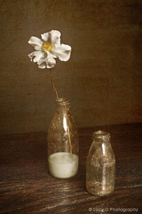 A vintage NZ milk bottle with flower, photo art print for sale.
