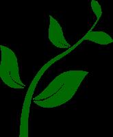 zinger-clipart-seedling.png