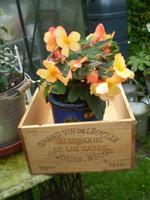 Vintage French Timber Wine Box, Year 1994, Storage shelves, garden display