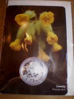 Wildflower Seeds Gardeners Greeting Card,Cowslip,primula veris
