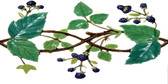 Grape Vine Border Tile
