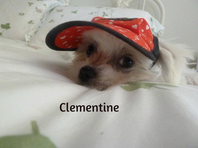 clementine-13-26.11.10-075-640x480-.jpg