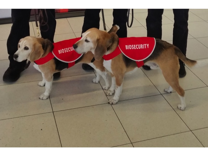 custombiosecurityred-beagle.jpg