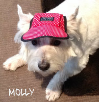Molly in her beautiful new dog hat.