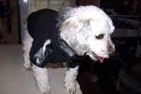 Dog Jumper - Black with luxurious zebra fur trim