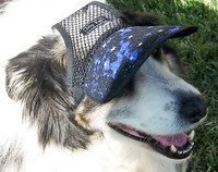 Molly in DH501V Large Galaxy/Mesh dog hat