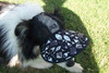 DHV502 - Fish/Mesh Dog Hat - Visor style Molly - Border Collie