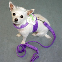 Microfibre Harness
