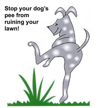 Is your dog's pee ruining your lawn?