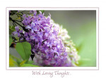 Lilac in Spring
