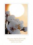 Apple Blossoms & Sun