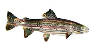 Trout 3D - Metal Wall Art