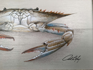 """Blue Crab Framed Art Claw Down 12"""" X 19"""""""