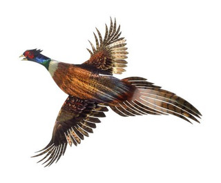 Flying Pheasant Metal Wall Art