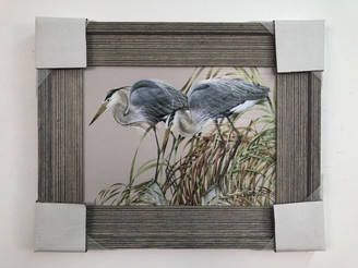 Herons Framed Painting