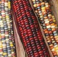 Ornamental Indian Corn Seeds (Heirloom)