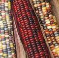 Ornamental Indian Corn Seeds (Heirloom)