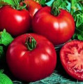 Wholesale Siberian Tomato Seeds