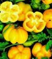 Bulk Yellow Stuffer Tomato Seeds