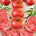 Big Boy F1 Tomato Seeds