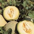 Tam Uvalde Cantaloupe-Wholesale