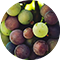 GrapeSeedExtract.png